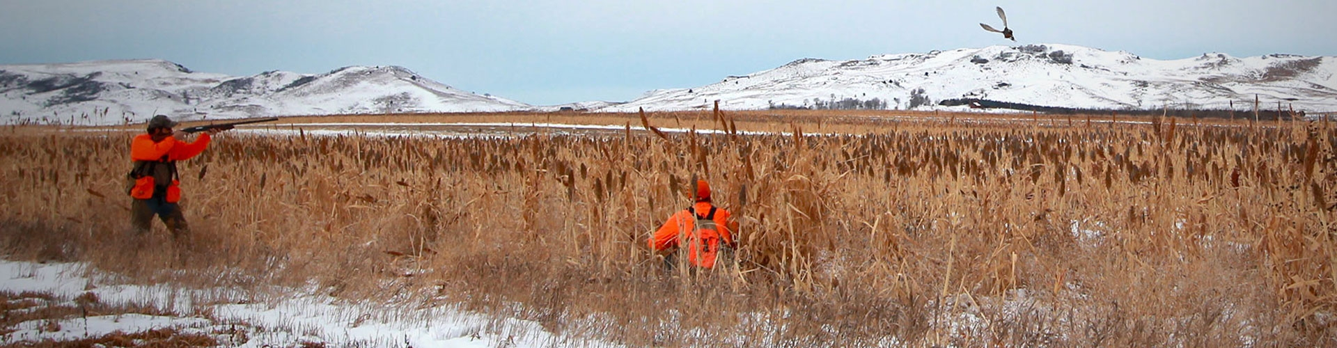 South Dakota Late Season Pheasant Hunts