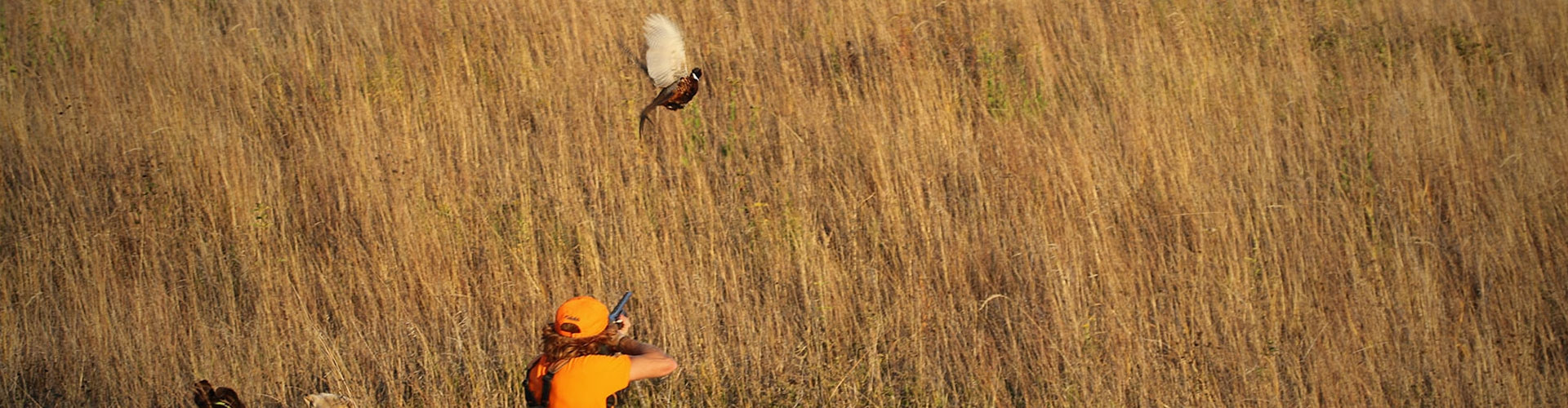 South Dakota Small Group Pheasant Hunts