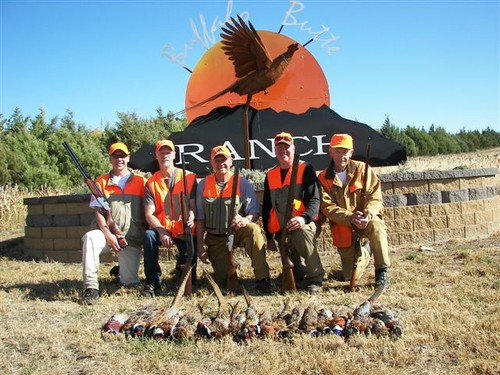 Pheasant Groups Photo