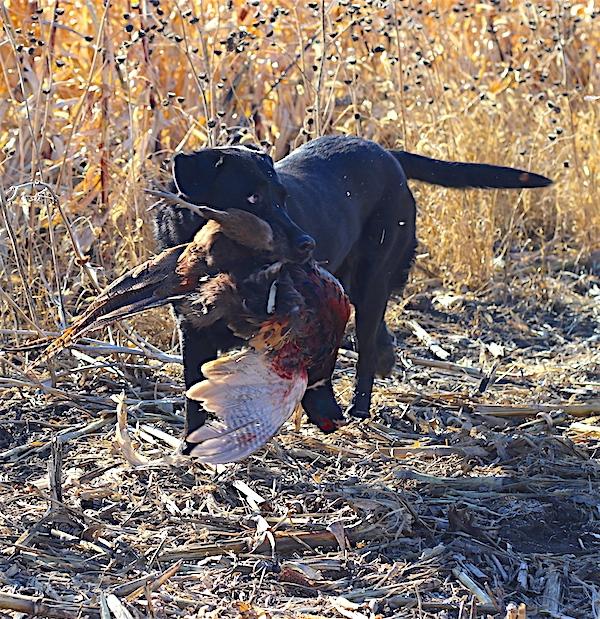 Best Bird Hunts in SD